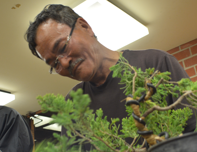 South Coast Bonsai Society Workshop with David Nguy – August 26