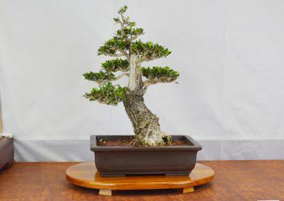 Ken Uyeda  |  Olive