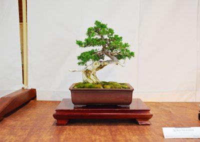 Tony Nguyen  |  Shimpaku